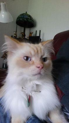 OMG Aww.. Meow.. Cats of Love Photos (82) Check more at http://dougleschan.com/the-recruitment-guru/uncategorized/aww-meow-cats-of-love-photos-82/
