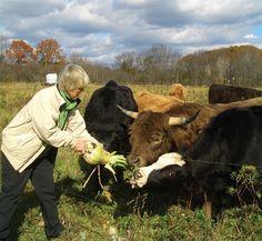 Farming Magazine - Goodbye Hay, Hello Turnips - February, 2013. On growing turnips for cattle forage.
