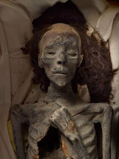 Queen Tiye, wife of Amenhotep III, mother of Akhenaten, grandmother of Tutankhamun; her 3,300-year-old remains . http://news.nationalgeographic.com/2015/09/150929-king-tut-tomb-nefertiti-egypt-archaeology/#/