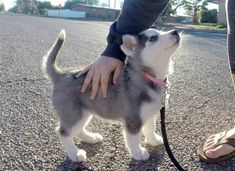 Such small such fluff - more at superhuggable.com