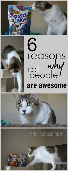 Six reasons why cat people are awesome|Ripped Jeans and Bifocals  |Cat people|cats|cat people versus dog people|pets|pet care|pet stories|cat stories|cat videos|cat food|cat products|pet food|pet products|cat treats| #PurinaMysteries #CollectiveBias #ad