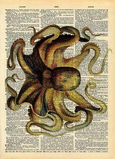 ...Octopus