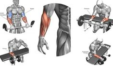 The 3 Best And Simple Exercise For Effective Forearm Gain Forarm Workout, Forearm Workout At Home, Dumbbell Workout, Waist Workout, Fitness Workouts, Gym Workout Tips, Easy Workouts, Gym Fitness, Workout Plans