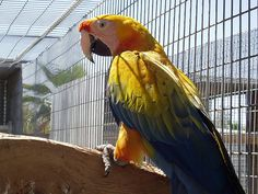 The Benefits Of Sunshine For Parrots