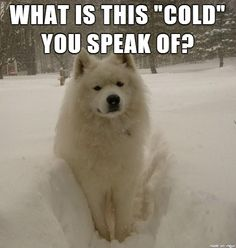 """""""I was born for this weather!"""""""