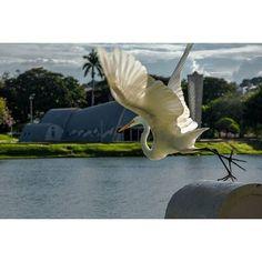"""O @marcelokelles caprichou nesse click na Lagoa da Pampulha! Um dos mais conhecidos """"cartões postais"""" de Belo Horizonte a igrejinha foi inaugurada em 1943 com linhas arrojadas apresenta mosaicos nas laterais da nave. Foi projetada pelo arquiteto Oscar Niemeyer considerada uma grande inovação arquitetônica. Saiba mais http://ift.tt/1bE3MkX e FB: Visite Minas Gerais  Obrigado por compartilhar Marcelo e parabéns pela linda foto! Use você também  #TurismoMG  em suas fotos e compartilhe com a…"""