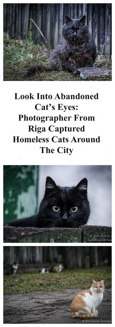 Look Into Abandoned Cats' Eyes: Photographer From Riga Captured Homeless Cats Around The City. Please repin to help bring awareness. Story and 23 cat photos: http://www.traveling-cats.com/2017/04/cats-from-riga-latvia.html (Riga, Latvia, homeless cats, abandoned cats, cat eyes, cats' eyes, photographer, photo shoot, cat photos, photo project, photography project, help cats, cats in need)
