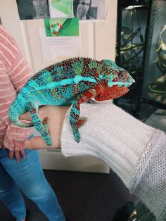 See more of caitymiller's content on VSCO. Cute Reptiles, Reptiles And Amphibians, Cute Baby Animals, Animals And Pets, Chameleon Lizard, Baby Chameleon, Cute Lizard, Exotic Pets, Exotic Animals