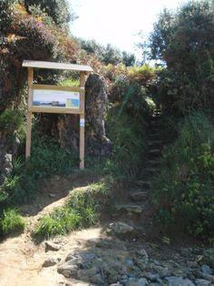 El Camino De Santiago. Spanish Sides, The Camino, Pamplona, Pilgrimage, Wilderness, Spain, To Go, Places To Visit, Walking