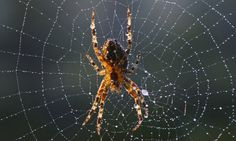 Provocation - Why do spiders spin webs?