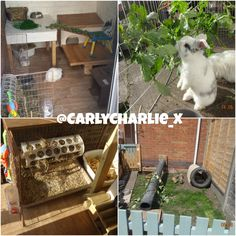My Bunnies home setup and their attached bunny garden. A geat alternative to traditional hutches. Lots of room, more room for your bunnies and affordable #ahutchisnotenough