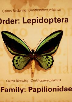 awesome Green ........butterfly