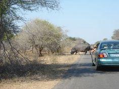 Amazing Kruger national park, South Africa