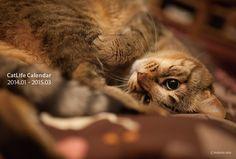 2014年版CatLifeカレンダー先行予約販売を開始しました