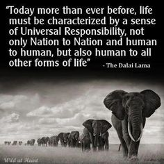 """""""Today more than ever before, life must be characterized by a sense of Universal Responsibility, not only Nation to Nation and human to human, but also human to all other forms of life."""" The Dalai Lama, via Wild at Heart Quotes To Live By, Life Quotes, Wisdom Quotes, Yoga Quotes, Life Sayings, Quotes Quotes, Tarot, Think, Inspire Me"""