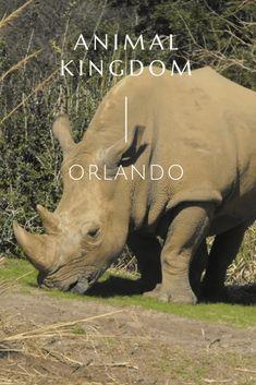 Animal Kingdom Orlando - So I Was Thinking Creative Writing, Animal Kingdom, Storytelling, Orlando, Photo Galleries, Elephant, Author, Pictures, Travel