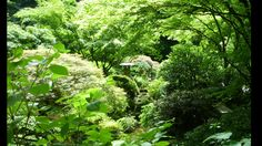 Portland Japanese Garden in Washington Park (Portland, Oregon).  The garden is made up of the five individual gardens this is the Chisen Kaiyu Shiki Teien - the Strolling Pond Garden  is two ponds connected with a meandering stream.  The upper pond features a 'moon bridge' while the lower pond holds a yatsuhashi  or 'zig-zag bridge'.