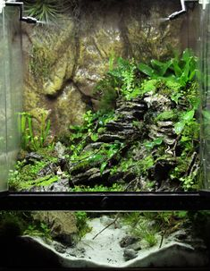 Exotic Aquatic 'Mount Miyoboku' terrarium Cube - All For Herbs And Plants Decor Terrarium, Aquarium Terrarium, Terrarium Plants, Planted Aquarium, Reptile Habitat, Reptile Room, Aquarium Fish Tank, Jellyfish Aquarium, Carnivorous Plants
