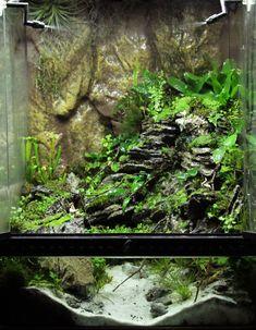 Exotic Aquatic 'Mount Miyoboku' terrarium 45cm Cube