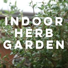 You have planted your home herb garden and watched it grow and flourish. They are extremely useful in many ways using herbs from a home herb garden requires Gardening For Beginners, Gardening Tips, Gardening Shoes, Arizona Gardening, Gardening Supplies, Amazing Gardens, Beautiful Gardens, Indoor Plants, Indoor Outdoor