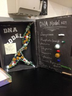 dna model project -
