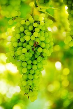 12grapes....one wish for each month of the new year.....
