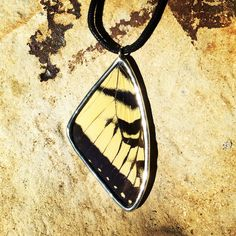 Tiger Swallowtail Butterfly Necklace Butterfly Necklace, Wings, Pendant Necklace, Jewelry, Jewlery, Jewels, Jewerly, Jewelery, Feathers