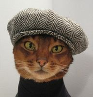 "City cats love Broadway musicals. This one saw ""Newsies.""  Rent-Direct.com - No Broker Fee Apartment Rentals in New York."