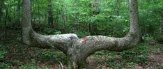 Cherokee County, Alabama - DeSoto and Chiaha where DeSoto visited - http://alabamapioneers.com/cherokee-county-alabama-desoto-chiaha/
