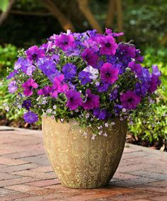 Purple and pink with a blue pot for the front stoop