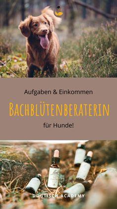 Komm mit mir in die Welt der Bachblüten, in meine Welt! Ich zeige dir, was alles auf dich zukommt, wenn du Bachblüten-BeraterIn werden möchtest. Denn das ist mehr, viel mehr, als nur ein paar Tropferl verabreichen. Es ist eine Arbeit, ein Job, der mein Leben erfüllt und bereichert - und vielleicht auch bald deines. <3 // #Bachblüten #BachblütenberaterinfürHunde #Hund Tricks, Blog, Toller Dog, Natural Home Remedies, Blogging