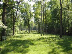Croatia, Turopolje, turopoljski lug- wood of Turopolje region