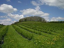 Riverford - Wikipedia Vineyard, Management, Outdoor, Desk, Outdoors, Vine Yard, Vineyard Vines, Outdoor Games, The Great Outdoors
