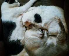 cat puzzle....