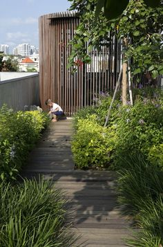 The Small Garden is a landscape design studio specialising in balcony, courtyard, commercial and small-space garden design across Brisbane, Sydney and Melbourne. Small Gardens, Outdoor Gardens, Rooftop Gardens, Outdoor Patios, Outdoor Rooms, Garden Architecture, Sustainable Architecture, Residential Architecture, Contemporary Architecture