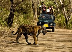 Adventure Amidst the Wilderness of Corbett National Park