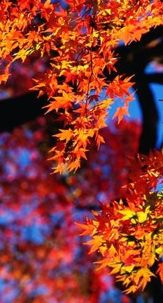 .....fall leaves.... dafür liebt das Team vom Posthotel Kolberbräu in Bad Tölz den Herbst - bunte #Blätter zaubern eine Farbenpracht die begeistert