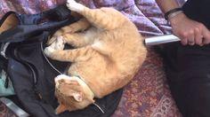 Gatto divertente  Funny Cats