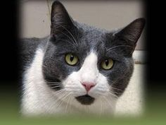 Aly enjoys looking out the window and watching the world go by. Learn more about this beautiful black and white cat in Petfinder's Fit FurKeeps Gallery.