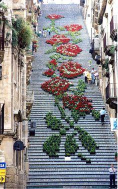 Caltagirone, Sicilia. Grandioso disegno floreale in onore di Maria SS.ma di Conadomini. Scala S.Maria del Monte Fotografía: Andrea Annaloro