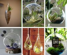 Hanging Air Plant homes - perfect for my mom who has a cat who eats any plant in sight