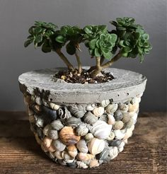 4inches around 3inches high. Holds a 2x2inch candle. .90lb This concrete pot could be used as a candle holder, or succulent pot. It is encrusted with small shells I collected from Bear Lake Idaho. I like the shape of this one, with its rounded bottom. If you want to use it as a