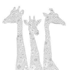Animal Kingdom Color Me Draw Millie Marotta 9781454709107