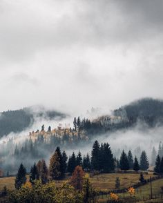 There's Autumn magic in those mysterious hills. Watching the fog move through the trees like a wave in the sky breaking up the greens browns and golden colours makes you feel like you are living some old Romanian folklore tale. Have a wonderful Sunday all!