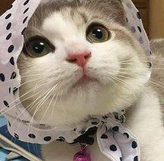 babushka kitty