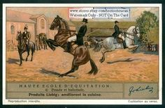 Schooling Training Horses 1930s Card NICE!
