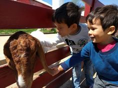 Farm trip for the kids at Young Jersey's Dairy in Yellow Springs, Ohio.