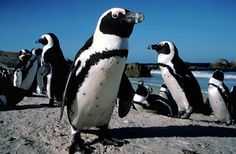 If I could, I would totally start a penguin farm.