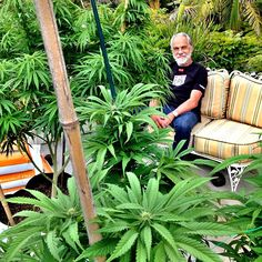 Tommy Chong with weed plants