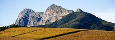 Breathe taking view, Anura Vineyards Tasting Room, Cosy, Breathe, Westerns, Vineyard, Menu, Cheese, Mountains, Nature
